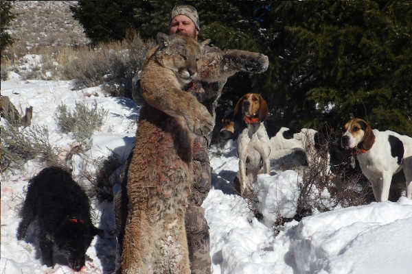 idaho-mountain-lion-hunt-201935D30F36-0F01-DB98-FEEF-824A9829E9F1.jpg